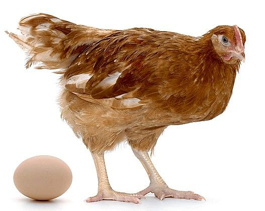 chicken and egg reduced